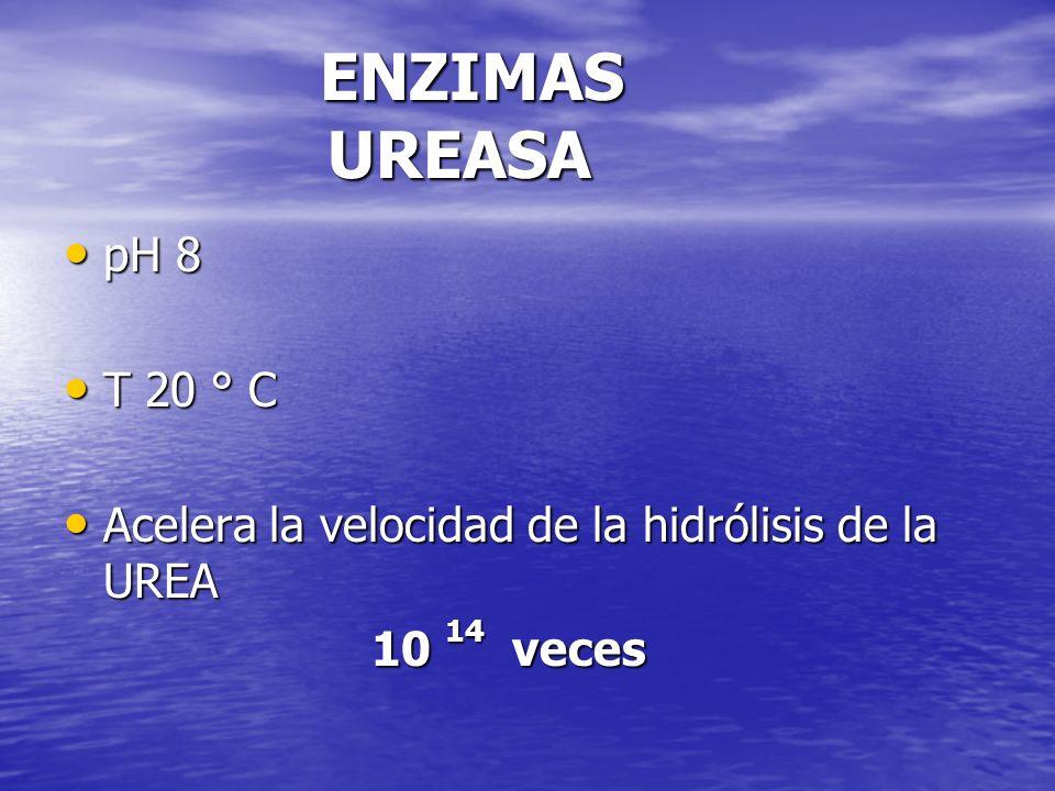 ENZIMAS UREASA pH 8. T 20 ° C. Acelera la velocidad de la hidrólisis de la UREA.