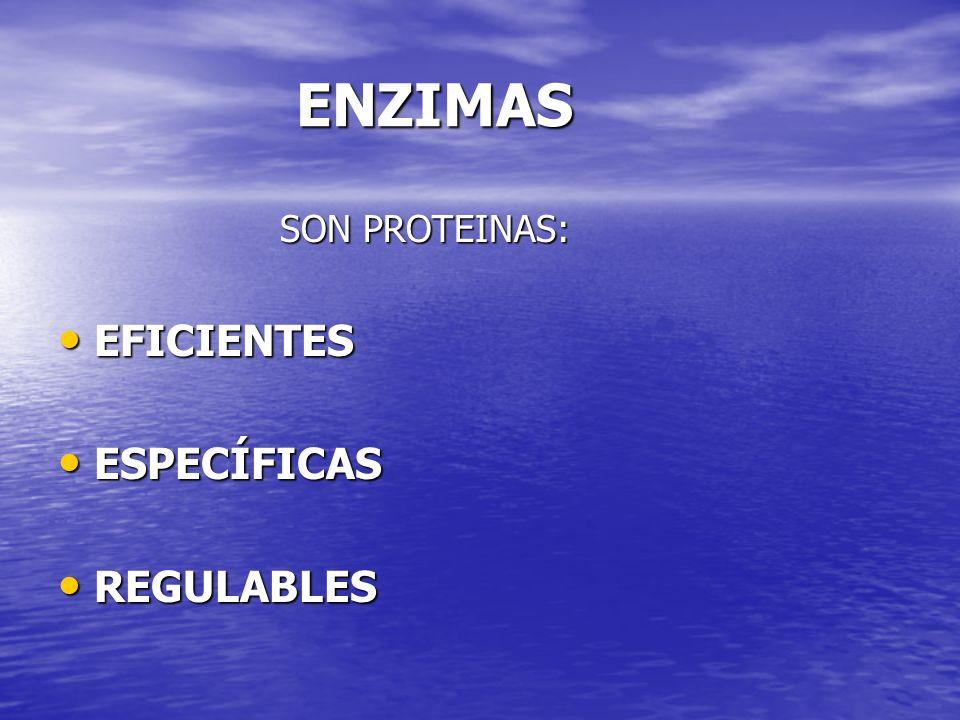 ENZIMAS SON PROTEINAS: EFICIENTES ESPECÍFICAS REGULABLES