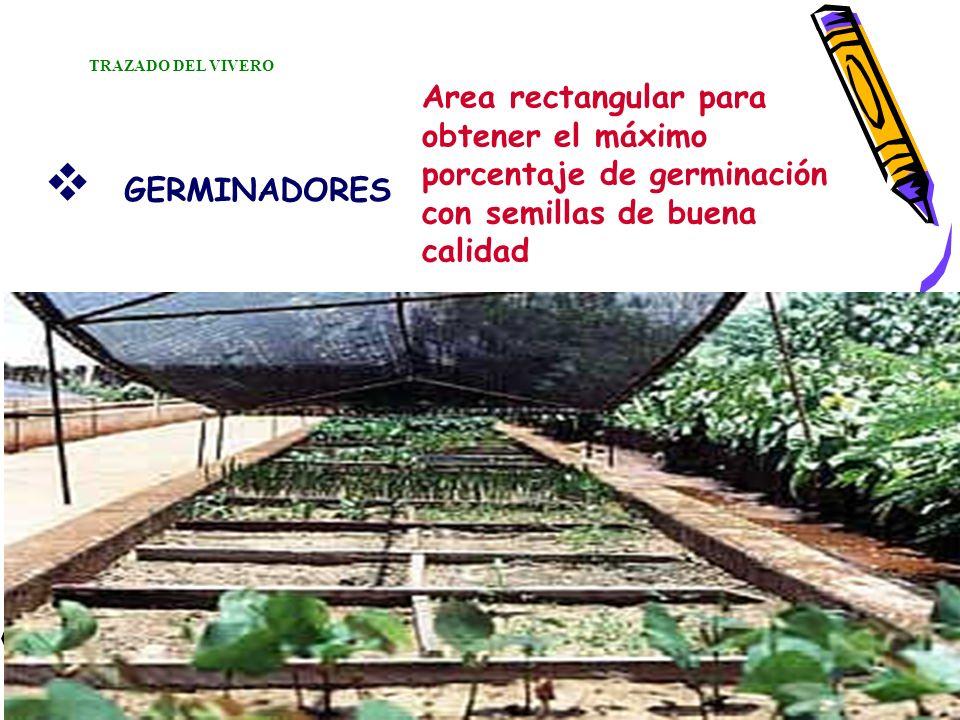 TRAZADO DEL VIVERO Area rectangular para obtener el máximo porcentaje de germinación con semillas de buena calidad.