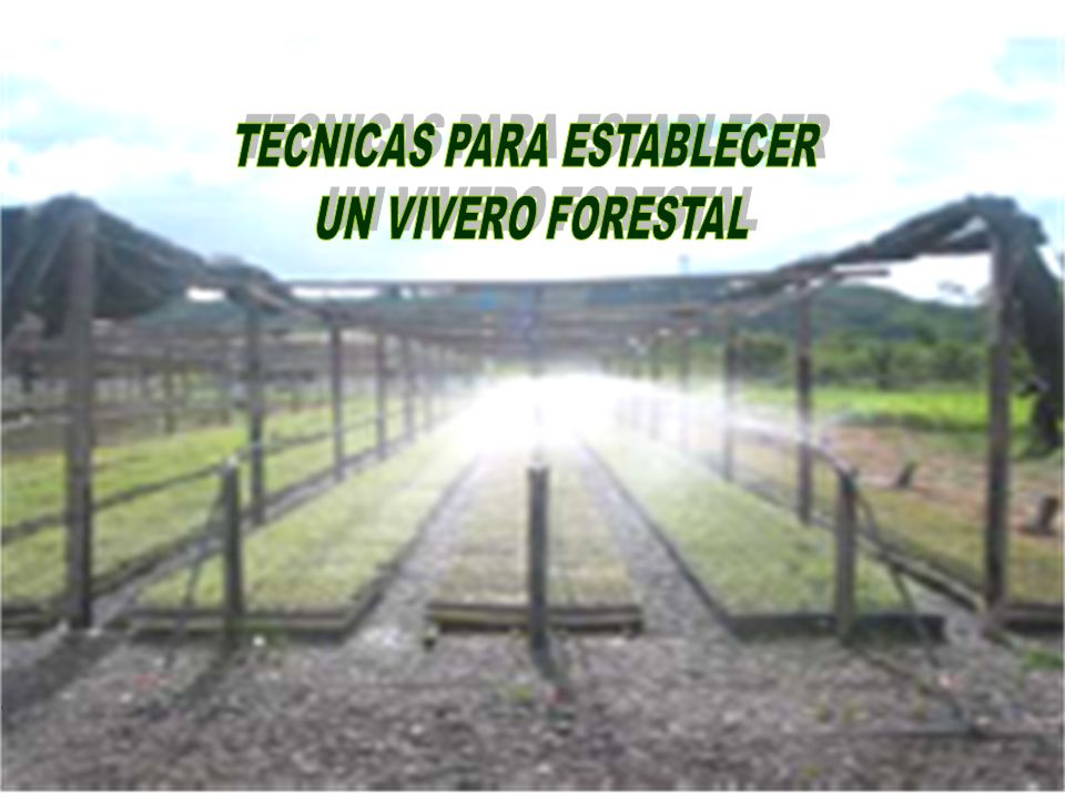 Instalaciones para propagacion ppt video online descargar for Proyecto vivero forestal pdf