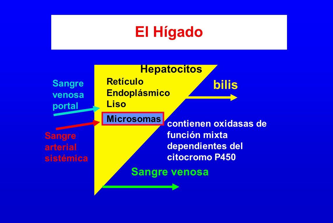 El Hígado bilis Hepatocitos Sangre venosa Retículo Sangre Endoplásmico