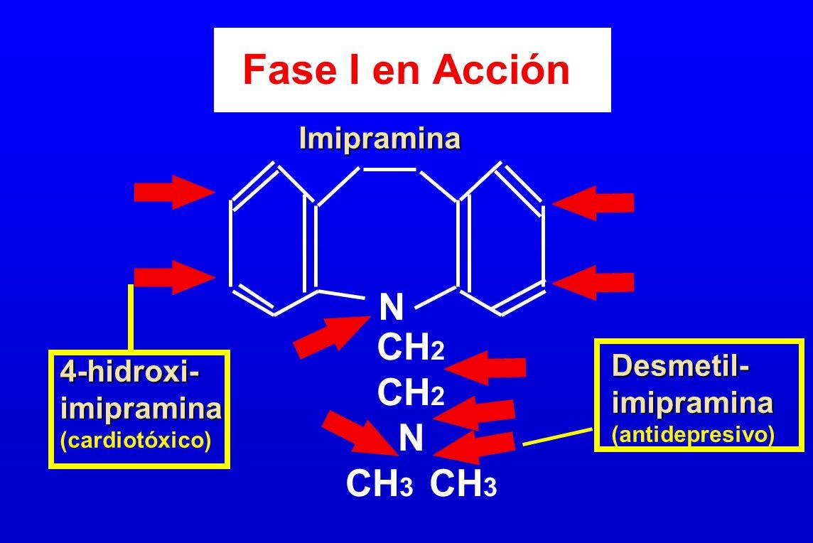 Fase I en Acción N CH2 N CH3 CH3 Imipramina Desmetil- 4-hidroxi-