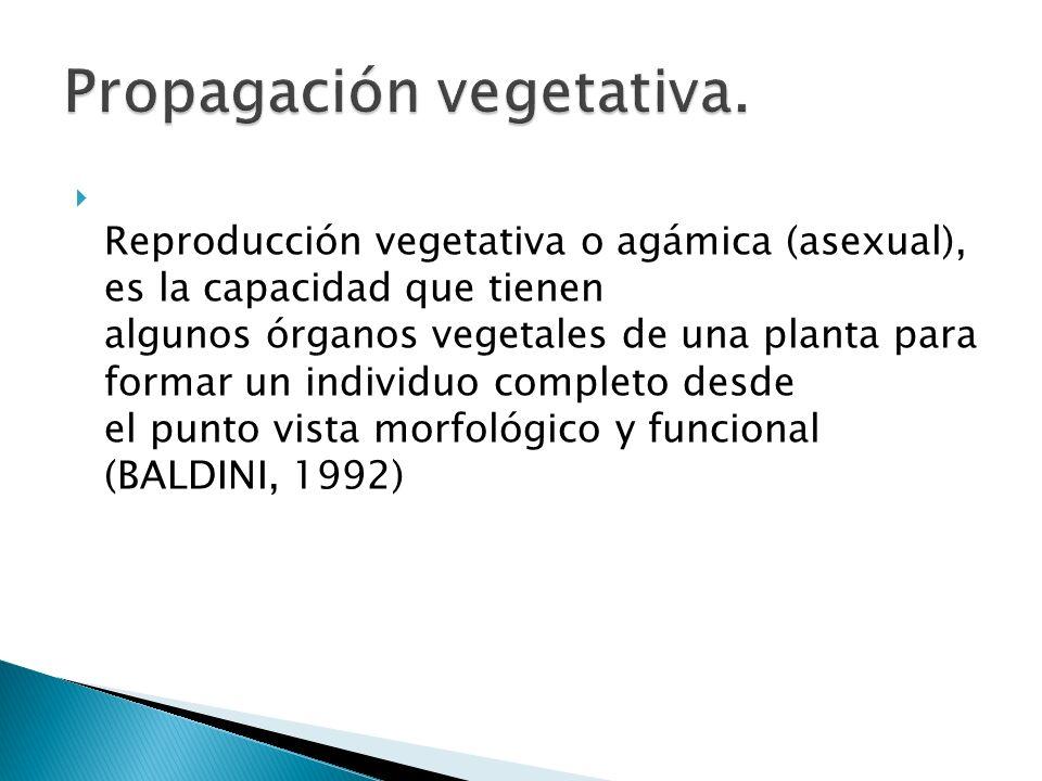 Propagación vegetativa.