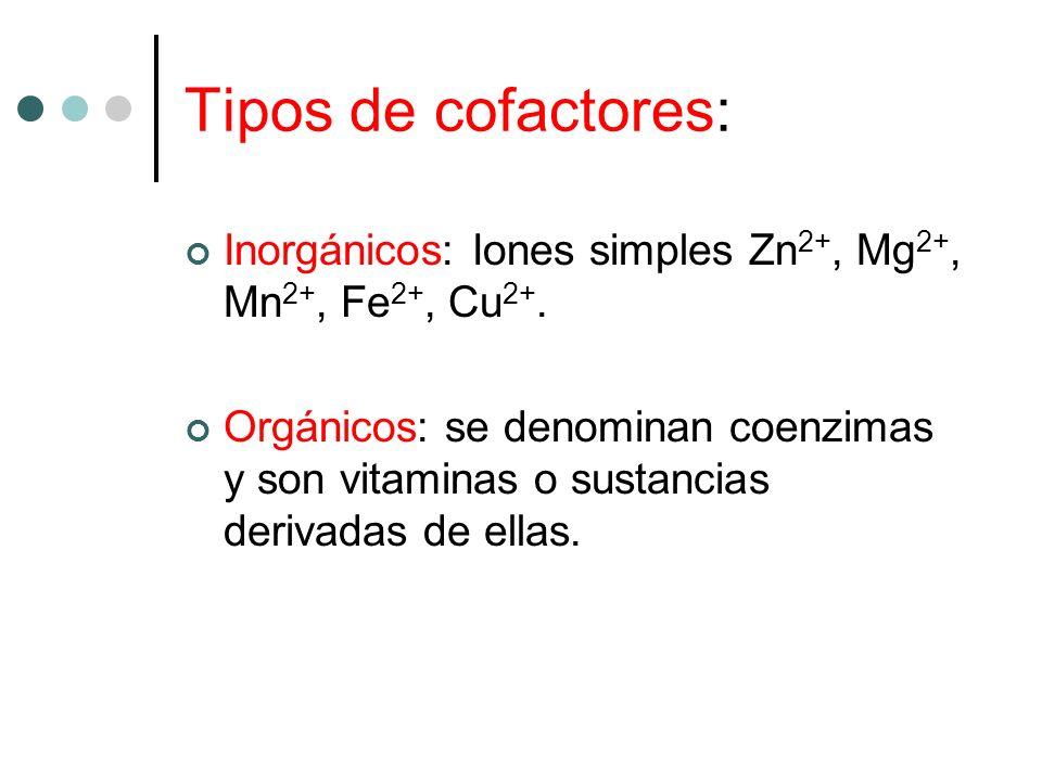 Tipos de cofactores: Inorgánicos: Iones simples Zn2+, Mg2+, Mn2+, Fe2+, Cu2+.