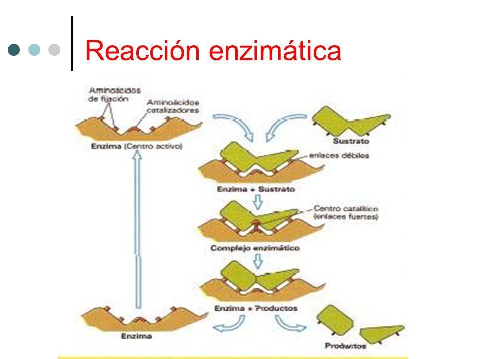 Reacción enzimática