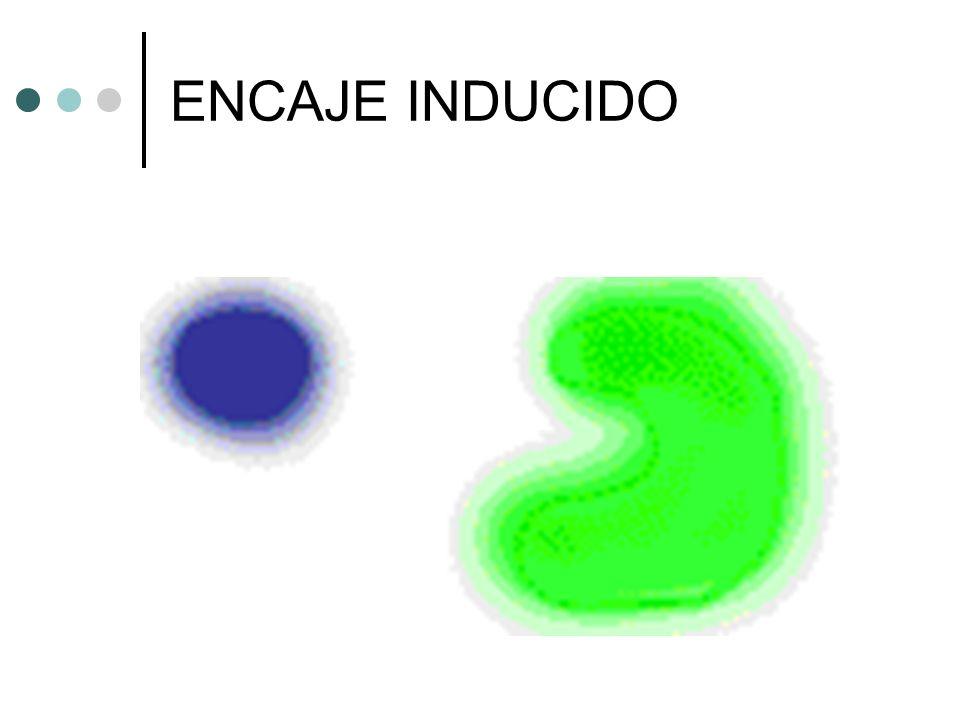 ENCAJE INDUCIDO
