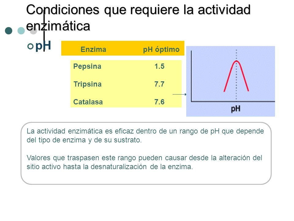 Condiciones que requiere la actividad enzimática