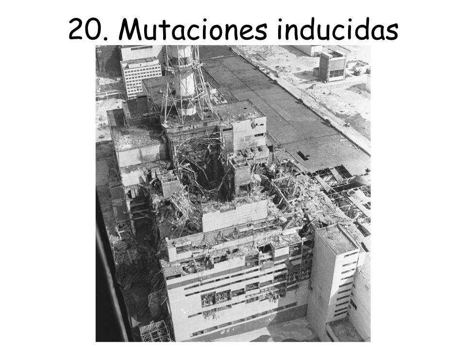 20. Mutaciones inducidas Reactor nuclear de Chernobyl tras la explosión del 26 de abril de 1986.