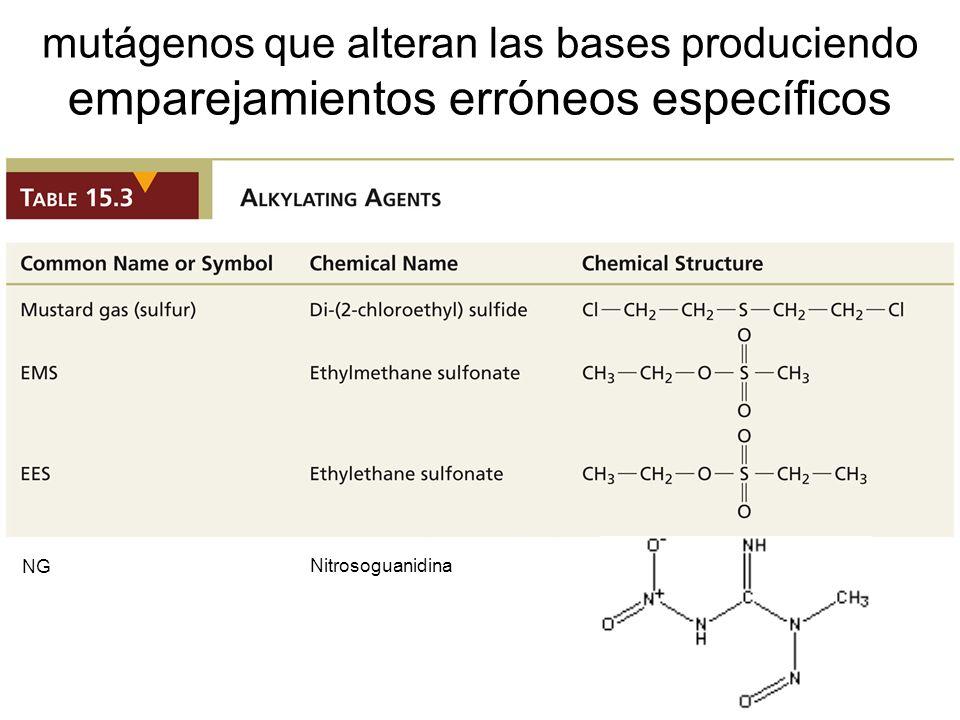 mutágenos que alteran las bases produciendo emparejamientos erróneos específicos