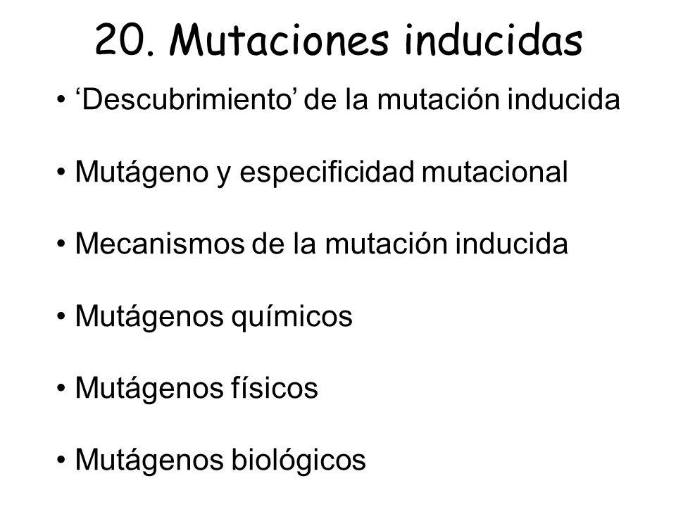 20. Mutaciones inducidas • 'Descubrimiento' de la mutación inducida