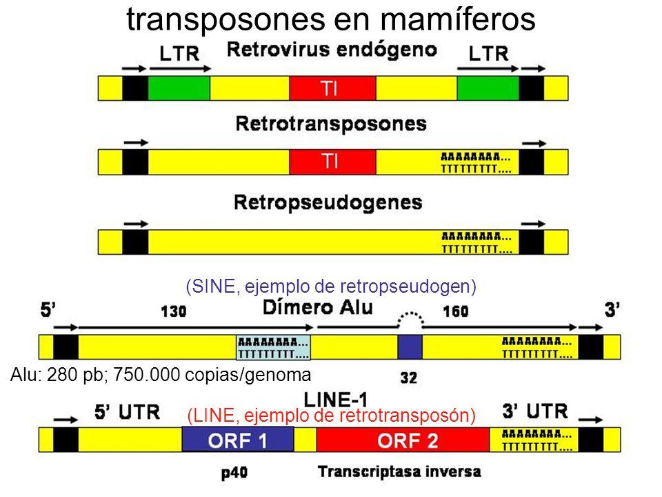 transposones en mamíferos