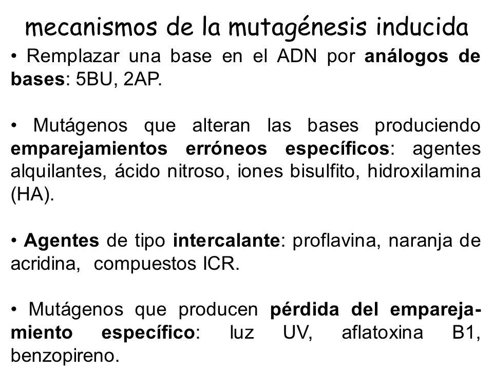mecanismos de la mutagénesis inducida