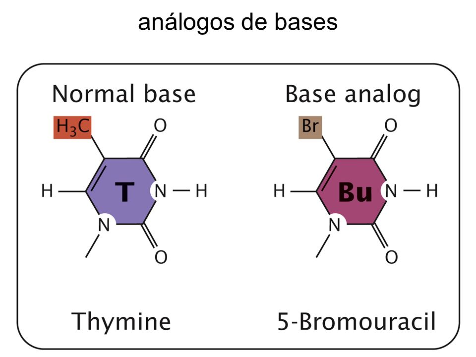 análogos de bases análogos de bases