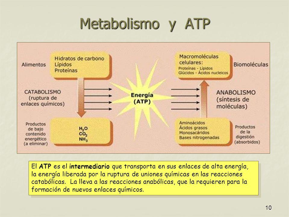 Metabolismo y ATP