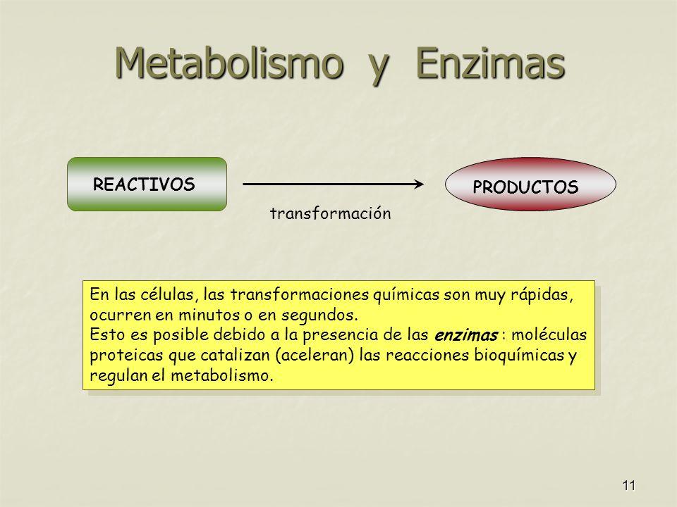 Metabolismo y Enzimas REACTIVOS PRODUCTOS transformación