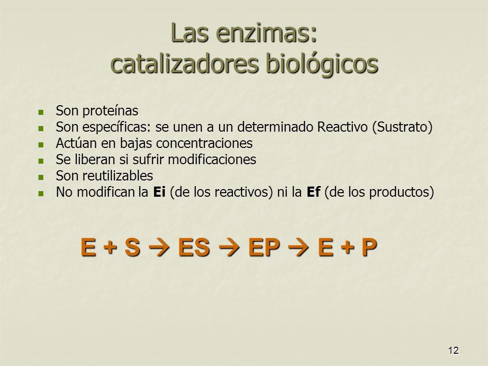 Las enzimas: catalizadores biológicos