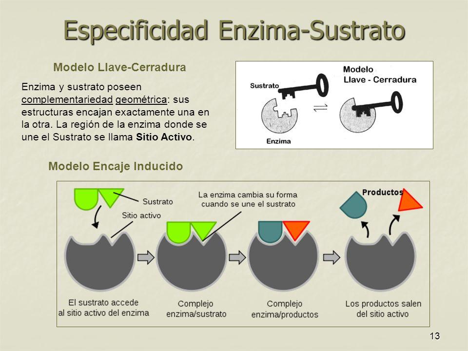 Especificidad Enzima-Sustrato