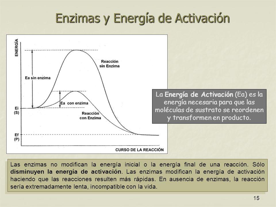 Enzimas y Energía de Activación