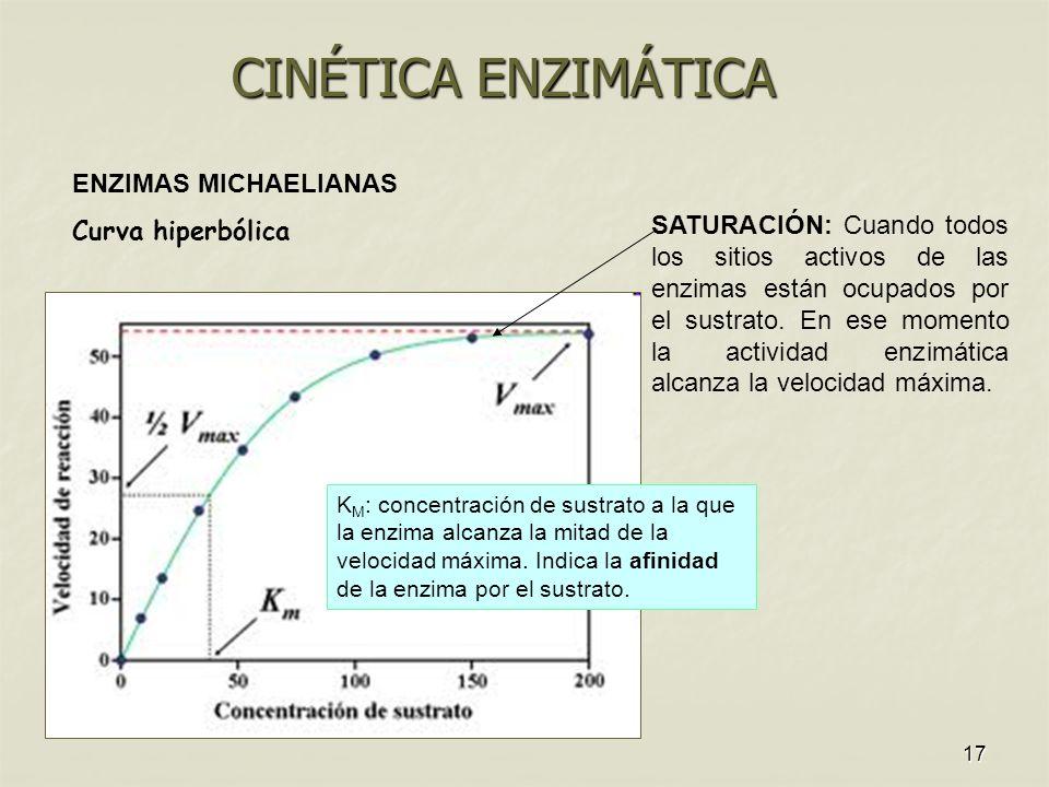 CINÉTICA ENZIMÁTICA ENZIMAS MICHAELIANAS Curva hiperbólica