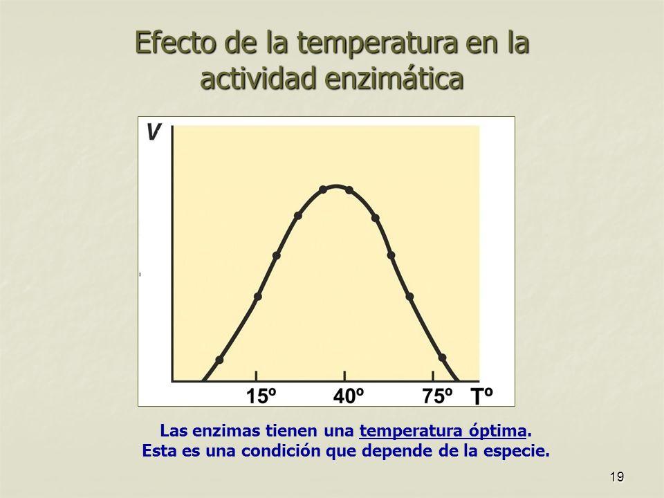 Efecto de la temperatura en la actividad enzimática