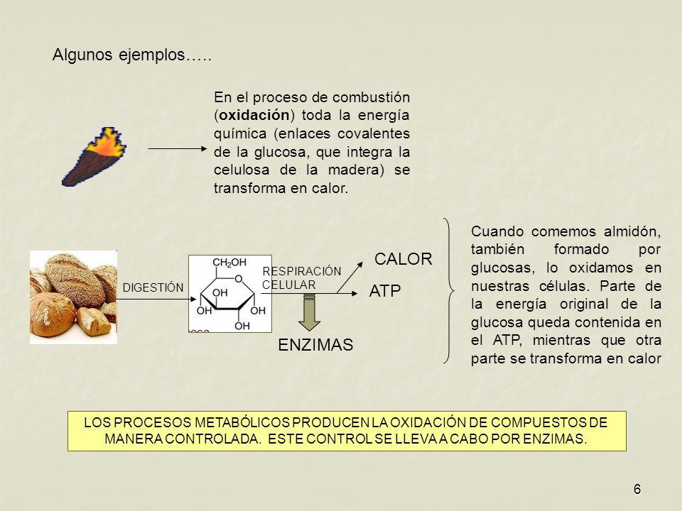 Algunos ejemplos….. CALOR ATP ENZIMAS