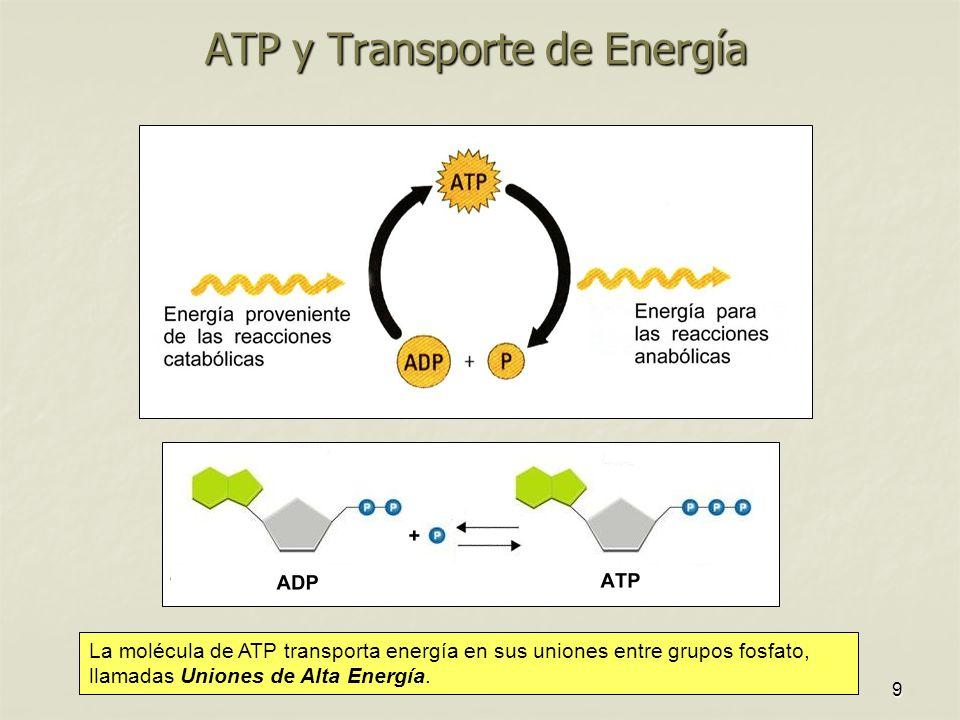 ATP y Transporte de Energía