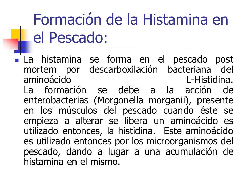 que es la histamina  es una sustancia qu u00edmica presente en
