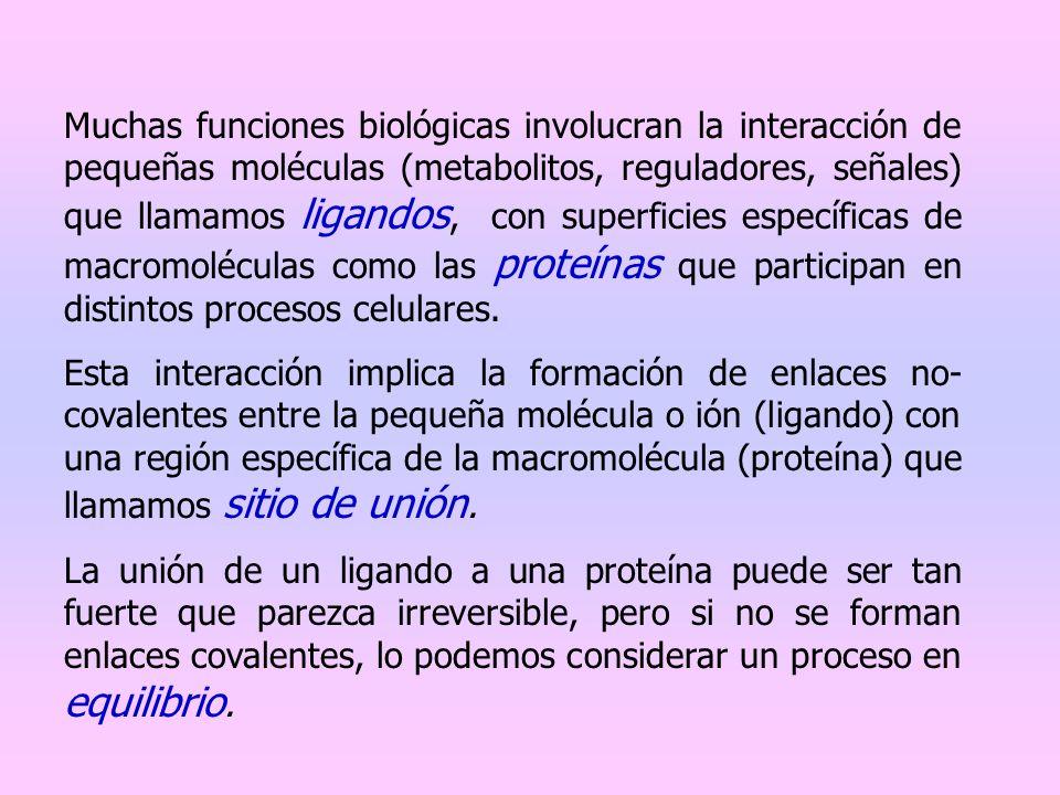 Muchas funciones biológicas involucran la interacción de pequeñas moléculas (metabolitos, reguladores, señales) que llamamos ligandos, con superficies específicas de macromoléculas como las proteínas que participan en distintos procesos celulares.