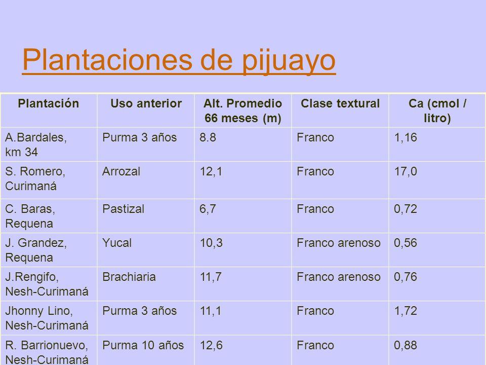Plantaciones de pijuayo