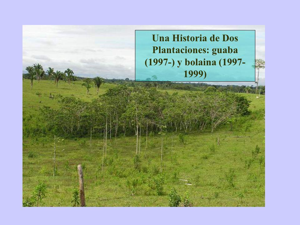 Una Historia de Dos Plantaciones: guaba (1997-) y bolaina (1997-1999)