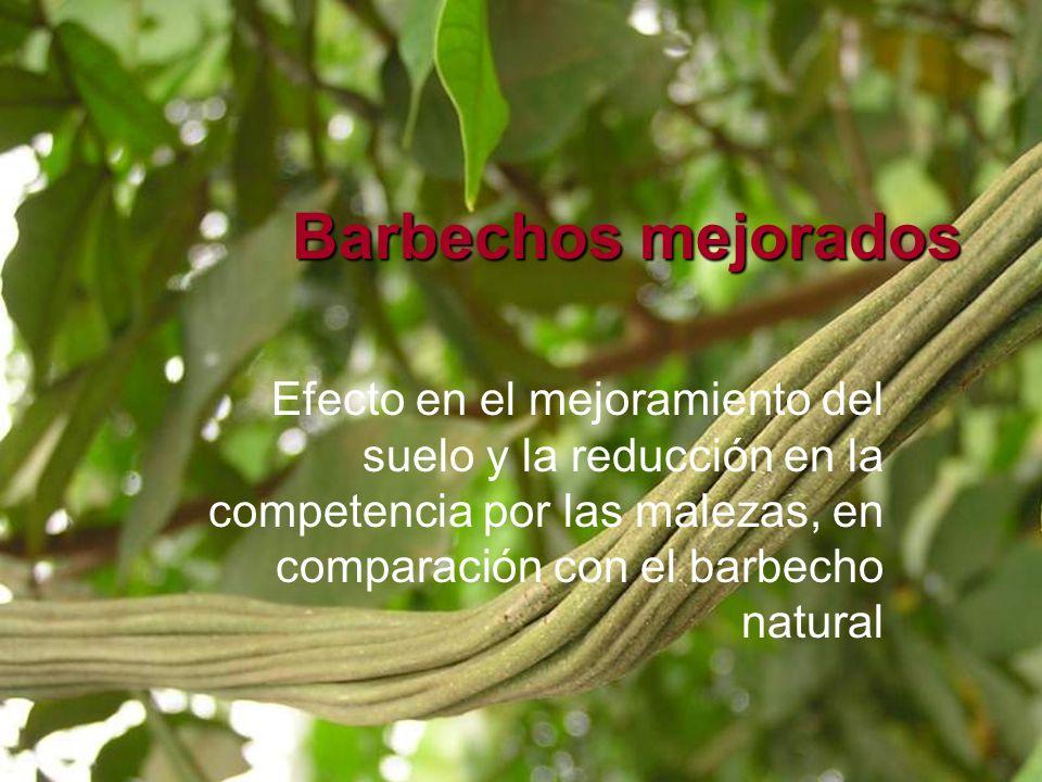 Barbechos mejorados Efecto en el mejoramiento del suelo y la reducción en la competencia por las malezas, en comparación con el barbecho natural.