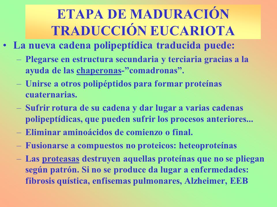 ETAPA DE MADURACIÓN TRADUCCIÓN EUCARIOTA