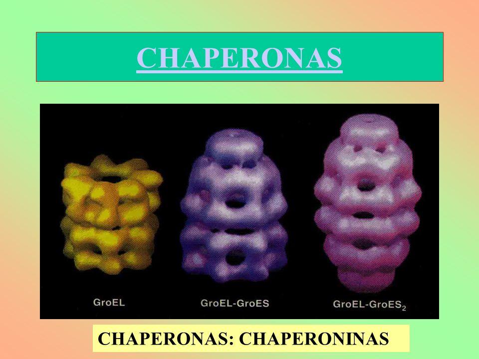 CHAPERONAS CHAPERONAS: CHAPERONINAS