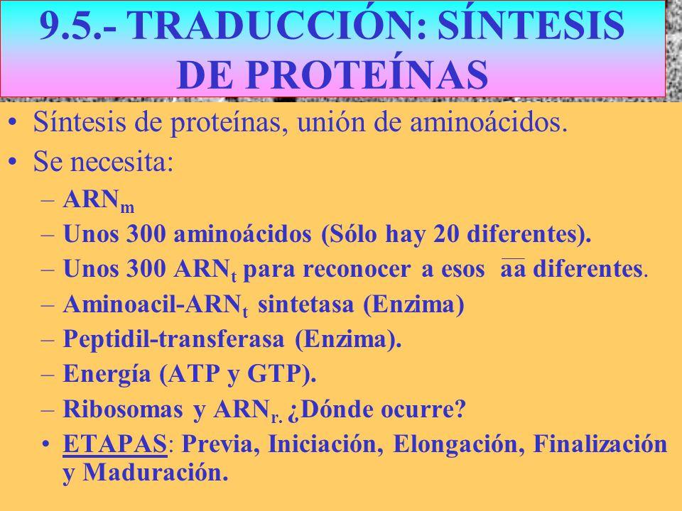 9.5.- TRADUCCIÓN: SÍNTESIS DE PROTEÍNAS