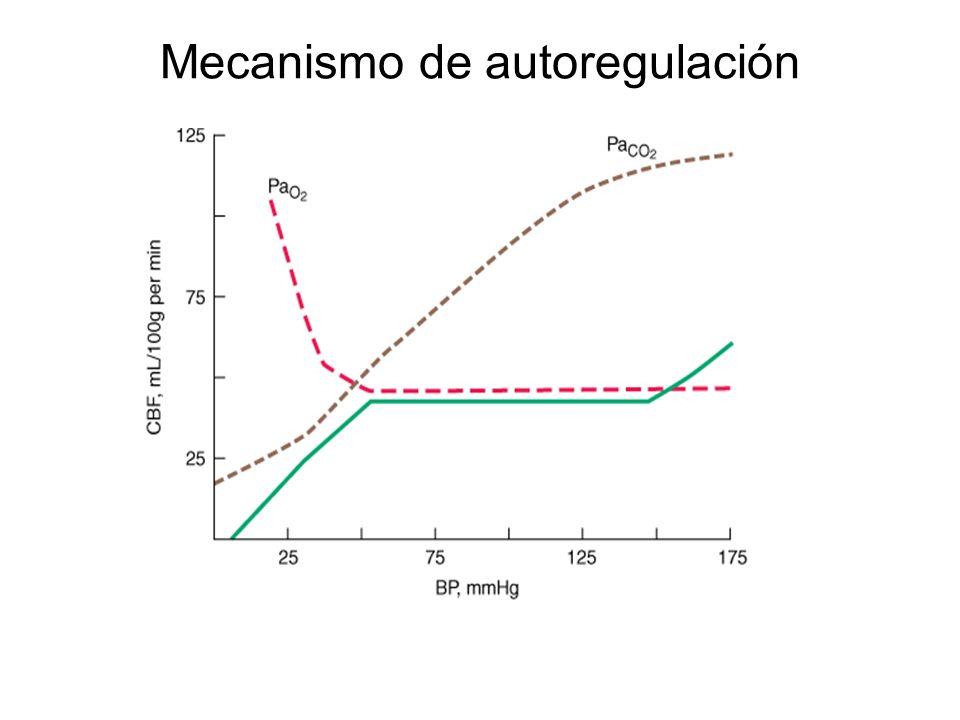 Mecanismo de autoregulación