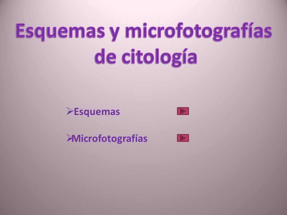 Esquemas y microfotografías