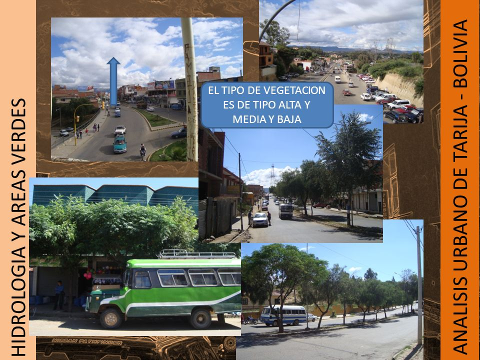 EL TIPO DE VEGETACION ES DE TIPO ALTA Y MEDIA Y BAJA