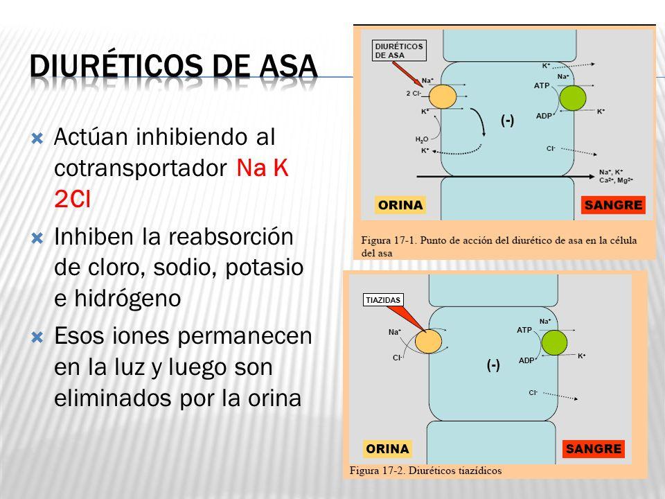 Diuréticos de asa Actúan inhibiendo al cotransportador Na K 2Cl