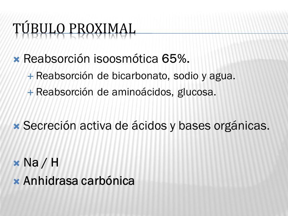 TÚBULO PROXIMAL Reabsorción isoosmótica 65%.