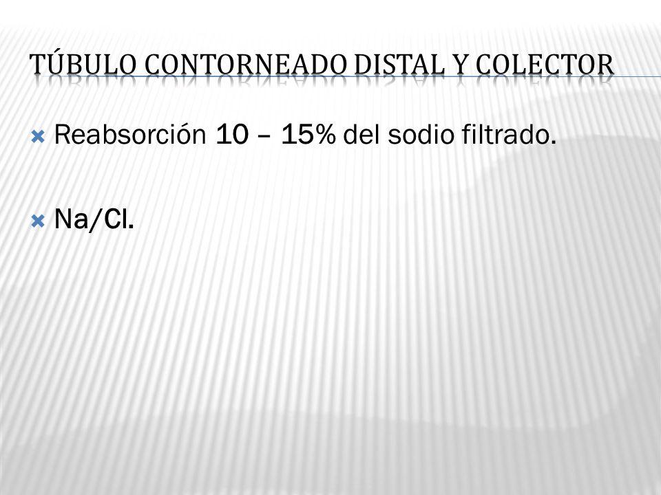 TÚBULO CONTORNEADO DISTAL Y COLECTOR