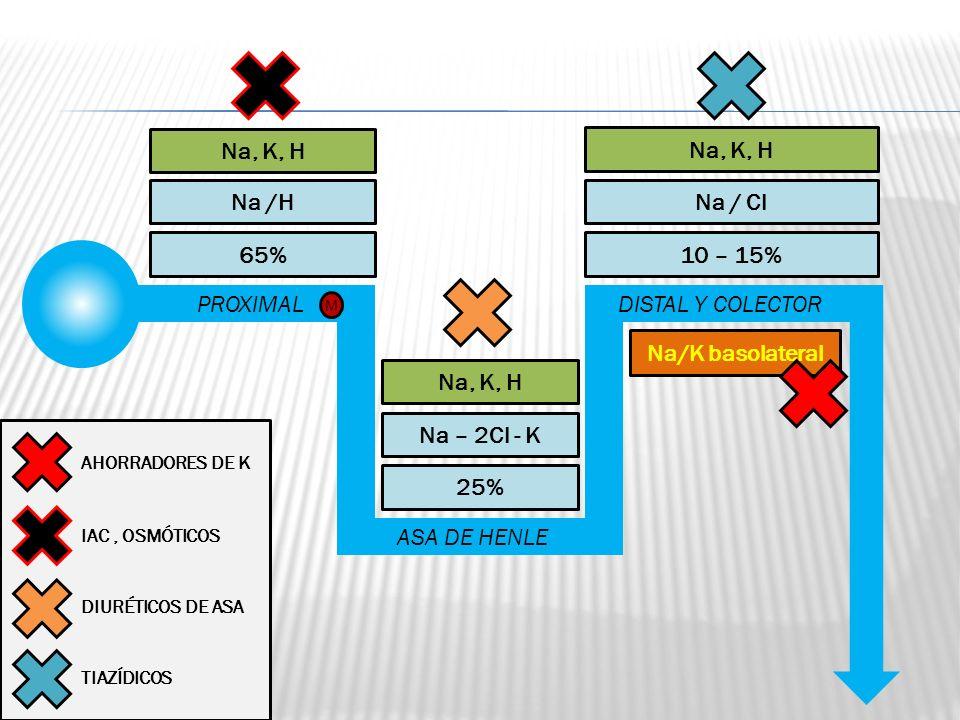Na, K, H Na, K, H Na /H Na / Cl 65% 10 – 15% PROXIMAL