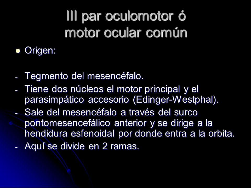 III par oculomotor ó motor ocular común