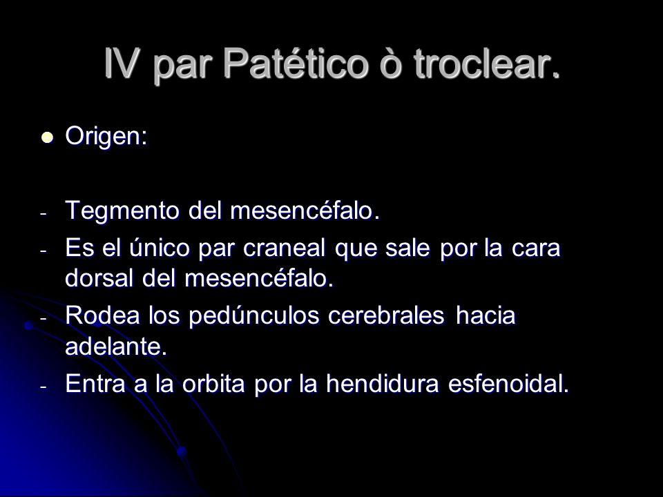 IV par Patético ò troclear.