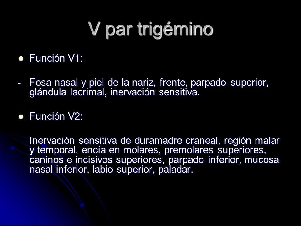 V par trigémino Función V1:
