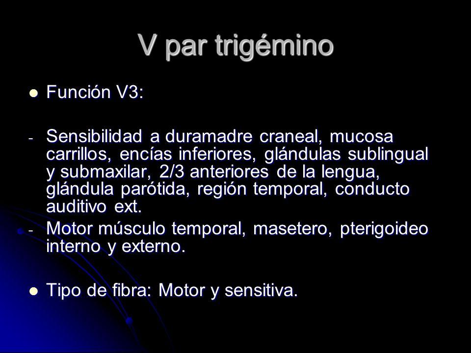 V par trigémino Función V3: