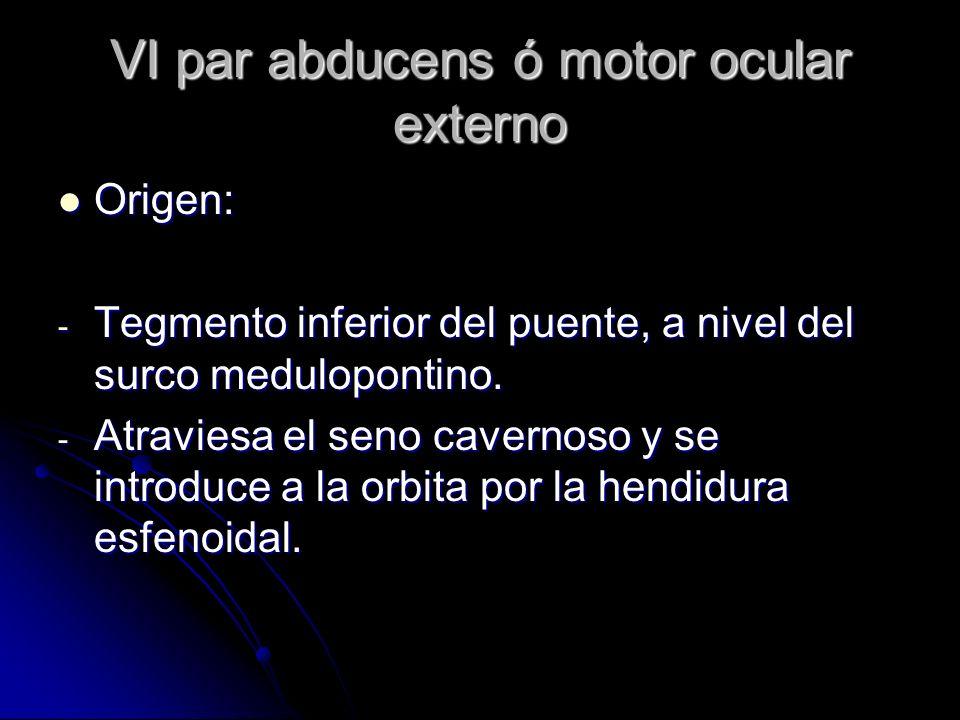 VI par abducens ó motor ocular externo