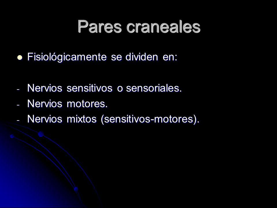 Pares craneales Fisiológicamente se dividen en: