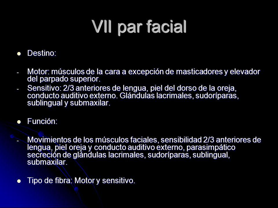VII par facial Destino: