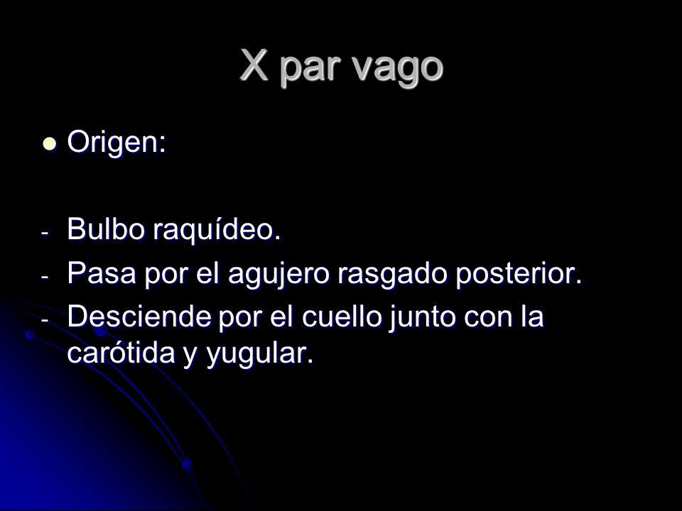 X par vago Origen: Bulbo raquídeo.