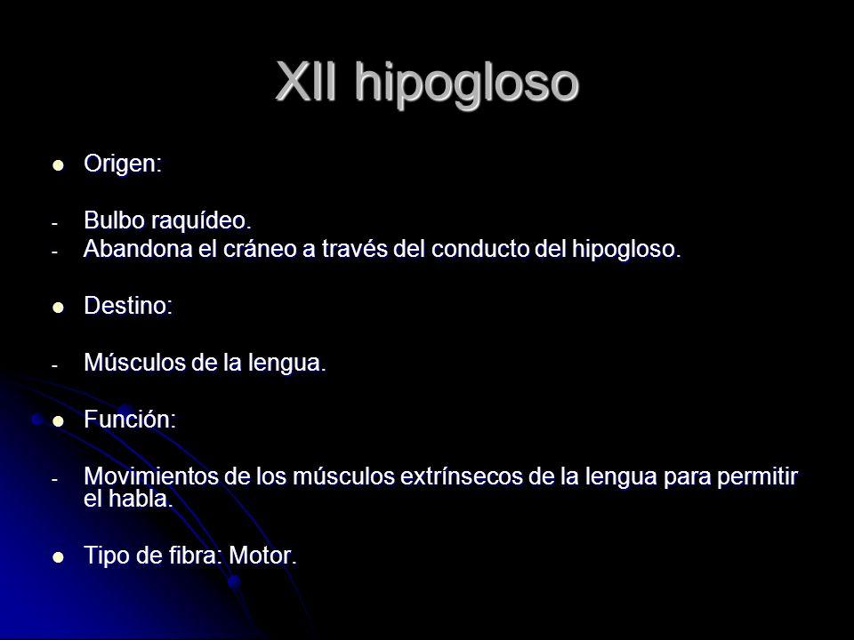 XII hipogloso Origen: Bulbo raquídeo.